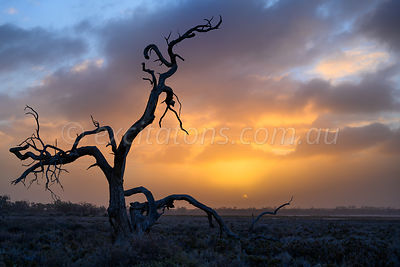 Dead tree, Fletchers Lake, Dareton, NSW, Australia.
