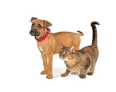Dog and Cat Together Side View White Background