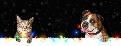Dog and Cat Hanging Christmas Lights on Web Banner