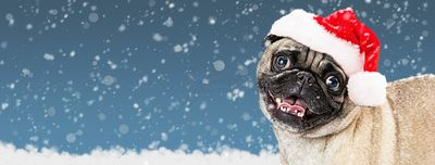 Christmas Pug Dog Web Banner