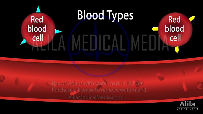 Blood types NARRATED animation