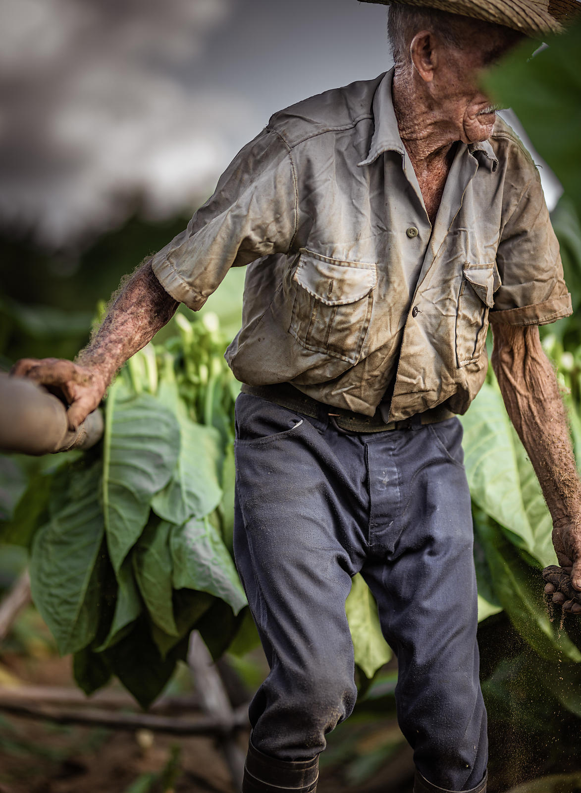 Vinales_Tobacco_FineArt_Photo