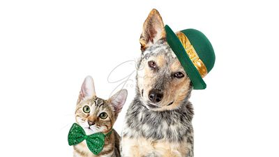 St Patricks Day Dog and Cat Together on White