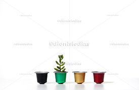 Recycled coffee capsules in mini pots with succulent.