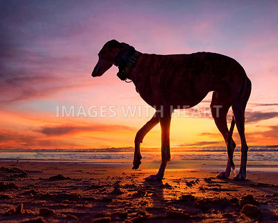 Single Dog on Beach during sunset