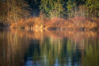 Early winter sunrise reflections in the Campbell River.