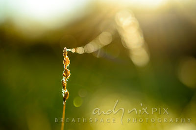 Wall Art Decor Photo Print: Floating Into Light