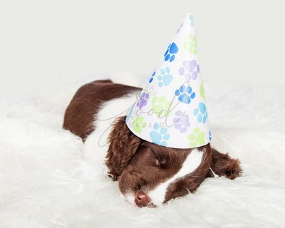 Sleepy Puppy After Birthday Party
