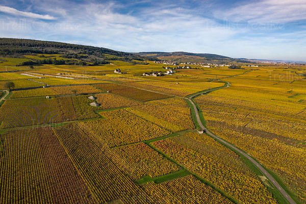 Aerial photo of beautiful vineyards in Burgundy France in autumn