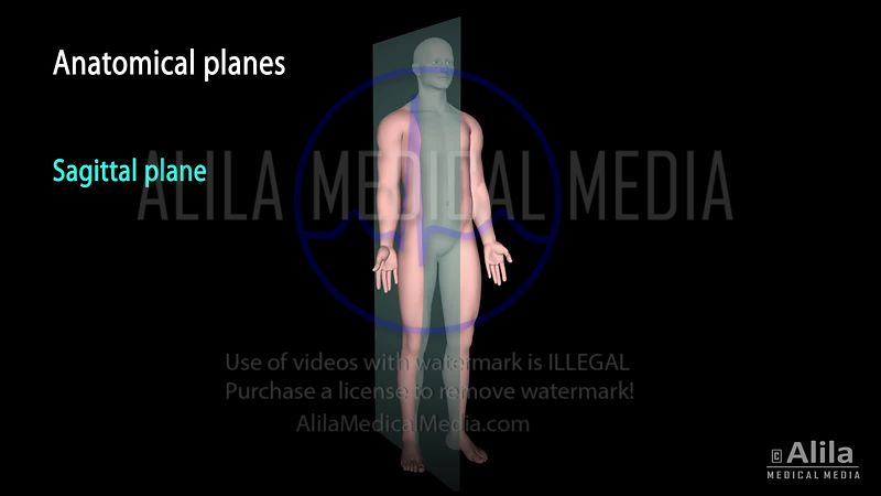 Anatomical terms 3D animation.