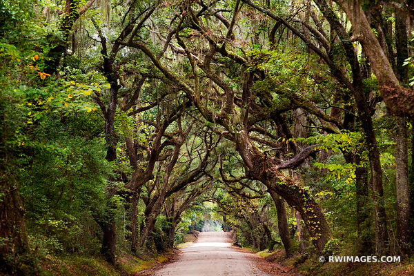 BOTANY BAY ROAD EDISTO ISLAND SOUTH CAROLINA