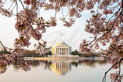 Thomas Jefferson Memorial Framed By Cherry Blossoms