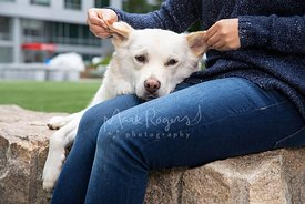 Woman's Hands Holding and Stroking Ears of a White Mixed Breed Dog