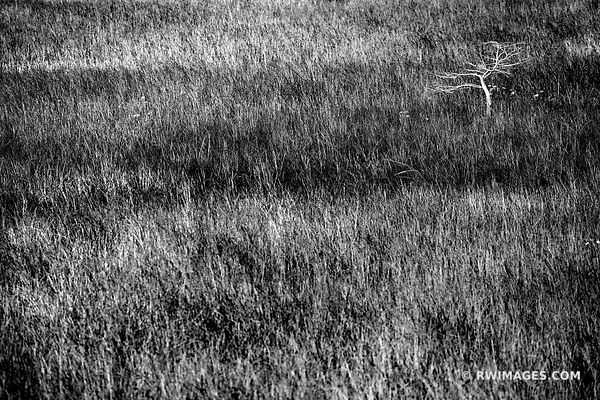 PA-HAY-OKEE PRAIRIE GRASSLANDS DWARF CYPRESS TREE EVERGLADES FLORIDA BLACK AND WHITE