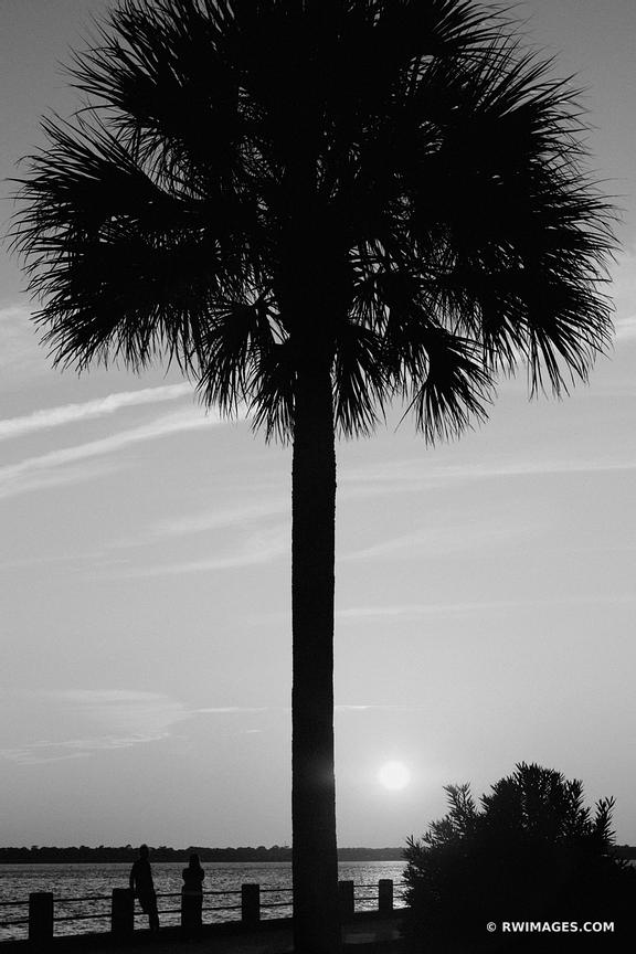 RIVER SUNSET PALM TREE CHARLESTON SOUTH CAROLINA BLACK AND WHITE