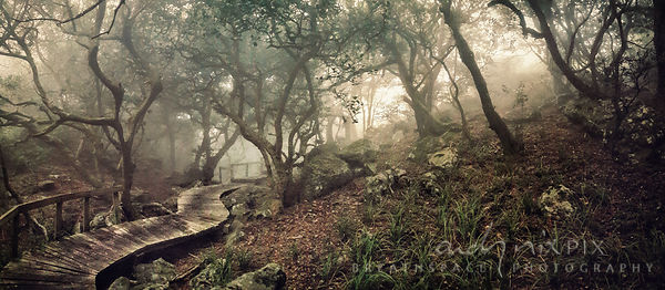 Path through afro-montane forest in the mist