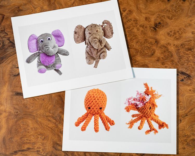 Lifecycle of a Dog Toy Project Prints