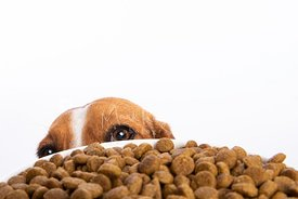 Head and Eyes of Dog Peeking over Dogfood Bowl