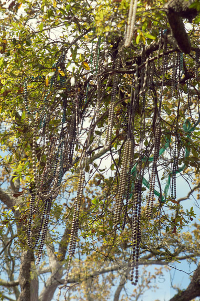 New Orleans tree with Mardi Gras beads hanging from the branches