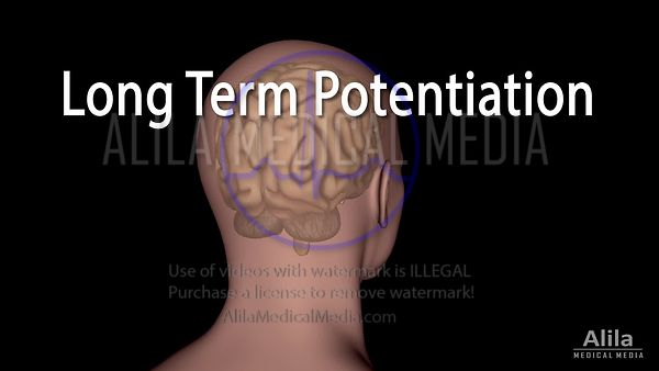 Long term potentiation and memory, NARRATED animation