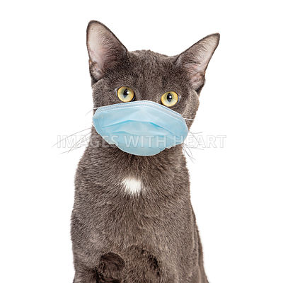 Pet Cat Wearing Protective Surgical Face Mask