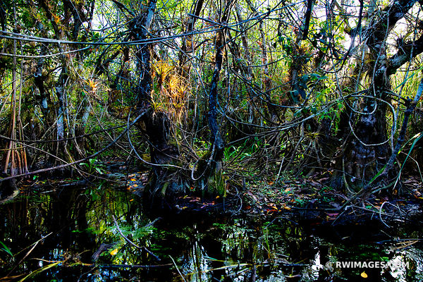TURNER RIVER BIG CYPRESS NATIONAL PRESERVE EVERGLADES FLORIDA