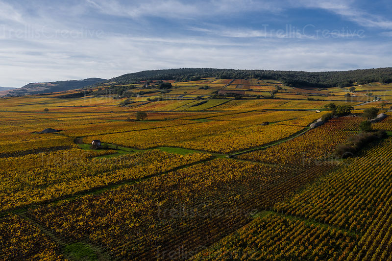 Aerial photo captures the beautiful fall foliage in France's historic Burgundy wine region