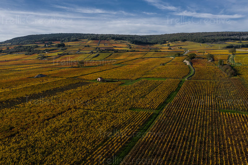 Chardonnay and pinot noir vineyards in Burgundy France in autumn