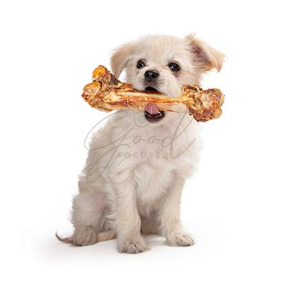 Small Dog Carrying Big Bone