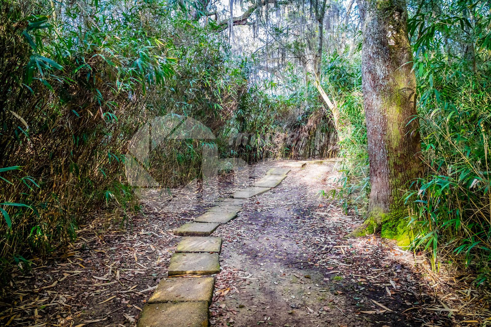 A forest trail with the sun shining through the foliage in Avery Island, Louisiana