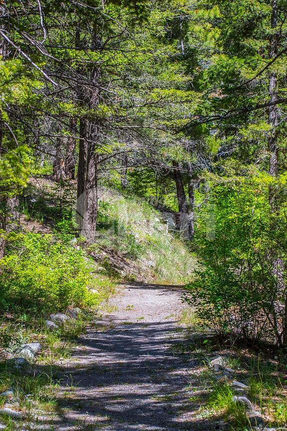A forest trail with the sun shining through the foliage in Helena National Forest, Montana
