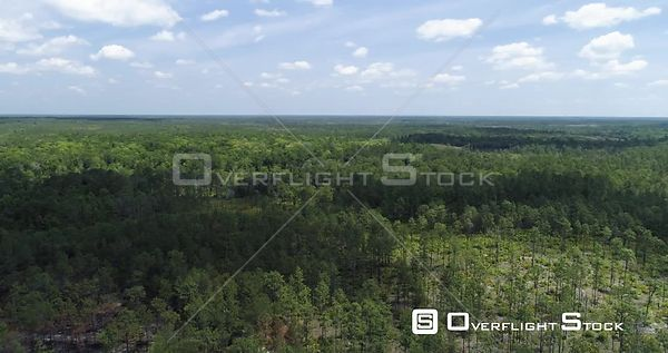 Establishing shot of forest area in East Florida, USA