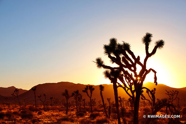 SUNSET JOSHUA TREE NATIONAL PARK CALIFORNIA AMERICAN SOUTHWEST DESERT LANDSCAPE