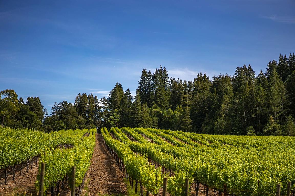 Sonoma County vineyard photography by Jason Tinacci