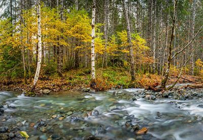 Autumn colours on a tributary of the Taylor River, Vancouver Island.