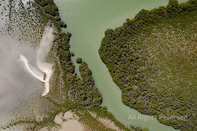 Top View of a Piece of Green Water Running Between Trees in Northland, New Zealand. This Sandy Area With Green Vegetation Is ...