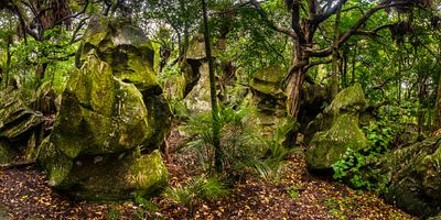 Karst formations amid the lush jungle palms and other trees, in the Rock Forest in Northland, New Zealand.