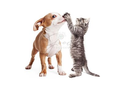 Funny Puppy and Kitten Playing