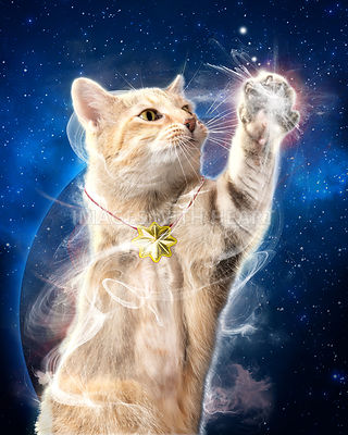 Cat reaching for star