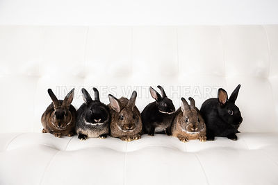 Six (6) Rabbits in a Row