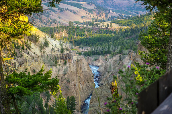 The famous Grand Canyon of the Yellowstone in Wyoming
