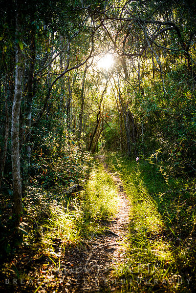 Forest path with sun shining through trees