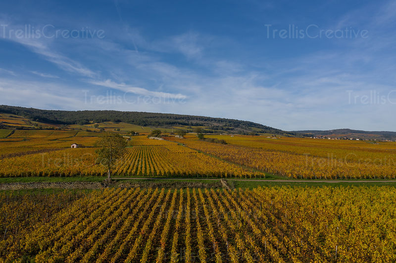 Breathtaking aerial photo of Burgundy vineyards in golden fall colors