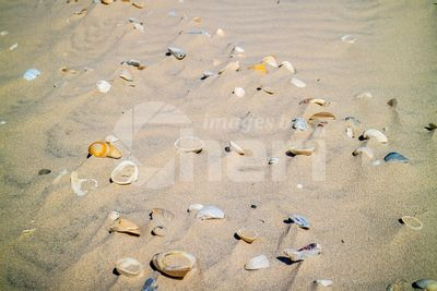 Beach with a lot of seashells on seashore in South Padre Island, Texas