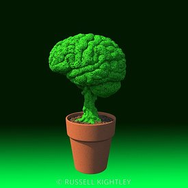 Brain in a Flowerpot #2 Green Gradient