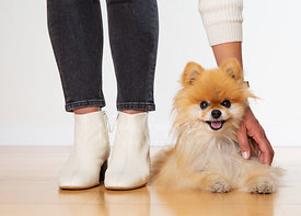 Woman Pets Pomeranian Lying on Floor