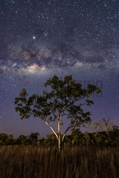 Milky Way and Eucalyptus at Astronomical Twilight