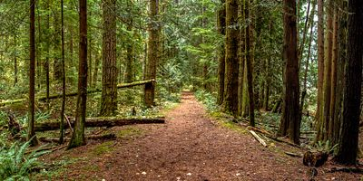 Cedar Woods Trail