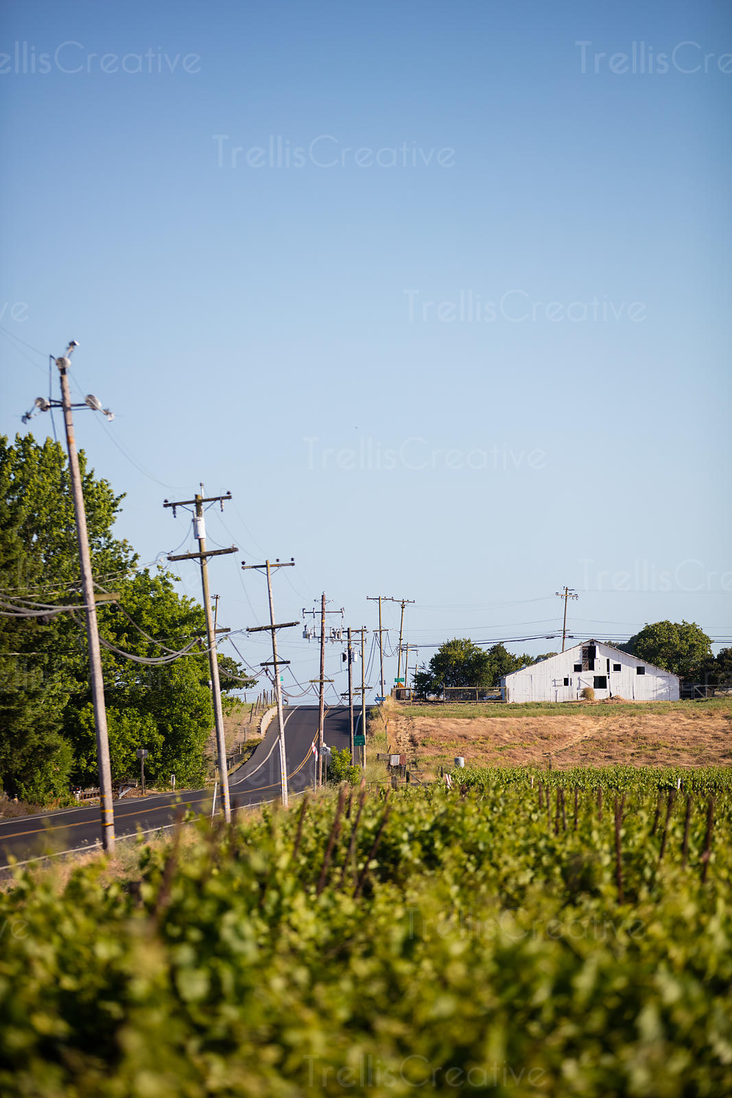 Highway through wine country, Carneros, Napa Valley, Napa County, California, USA.