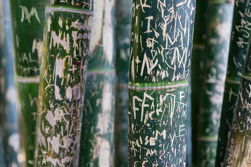 Graffiti on Bamboo
